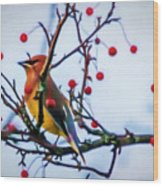Cedar Waxwing Painting Wood Print