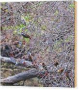Cedar Waxwings Feeding 2 Wood Print