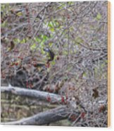 Cedar Waxwings Feeding Wood Print
