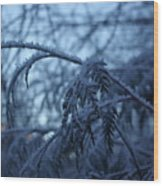 Cedars Of Ice Wood Print