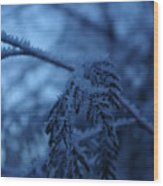 Cedars Of Ice II Wood Print