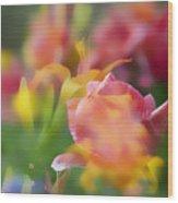 Celebration Of Color Wood Print