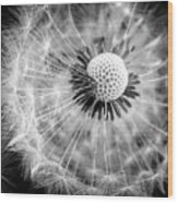 Celebration Of Nature In Black And White Wood Print