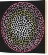 Cell Division Wood Print by Andy  Mercer