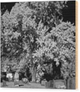 Cemetery Infrared Wood Print