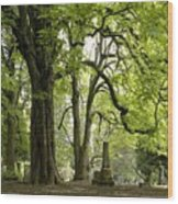 Cemetery  Trees 1 Wood Print