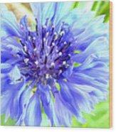 Centaurea Cyanus 1 Wood Print