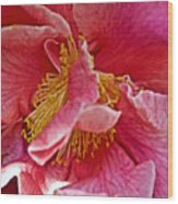 Center Of A Pink Camellia At Pilgrim Place In Claremont-california  Wood Print