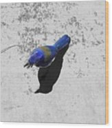 Center Of Attention- Scrub Jay Wood Print