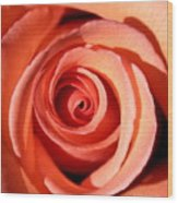 Center Of The Peach Rose Wood Print
