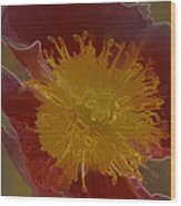 Center Of Yellow Wood Print