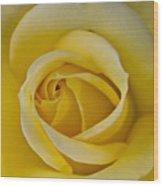 Centered Beautiful Yellow Rose Wood Print