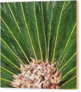 Centered Palm Wood Print