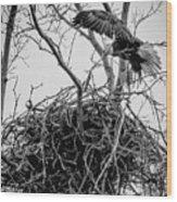 Centerport Eagle 1 Wood Print