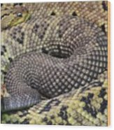 Central American Rattlesnakee Wood Print