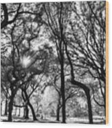 Central Park In Black And White Wood Print