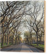 Central Park Nyc Wood Print