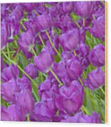 Central Park Spring-purple Tulips Wood Print