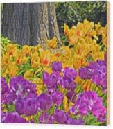 Central Park Tulip Display Wood Print