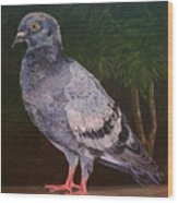 Central Park Visitor - Pigeon Wood Print