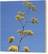 Century Plant Flowers Wood Print