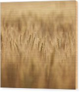 Cereal Field Wood Print