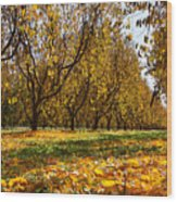 Ceres Orchard - Fall Wood Print