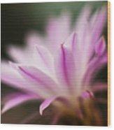 Cereus Glow Wood Print