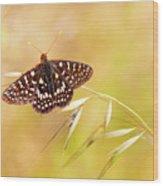 Chalcedon Butterfly Wood Print