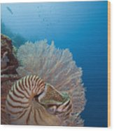 Chambered Nautilus Wood Print by Dave Fleetham - Printscapes