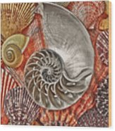 Chambered Nautilus Shell Abstract Wood Print