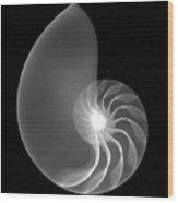 Chambered Nautilus Shell Wood Print