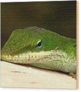 Chameleon 2 Wood Print