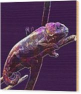 Chameleon Reptile Dinosaur Colors  Wood Print