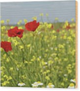 Chamomile And Poppy Flowers Meadow Wood Print