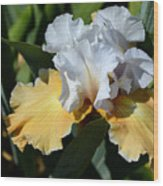 Champagne Iris Wood Print