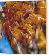 Changing Maples Wood Print