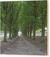 Chantilly France Street Scenes Wood Print