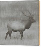 Charcoal Bull Elk In Field Wood Print