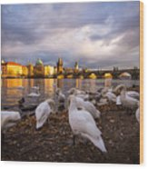 Charles Bridge, Prague With Swans Wood Print