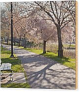 Charles River Cherry Trees Wood Print