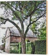 Charleston Church Street Live Oak And Ivy Wood Print