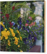 Charleston Flower Boxes Wood Print