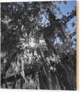 Charleston Library Green Wood Print