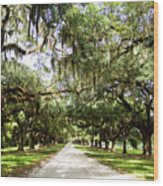 Charleston Oaks 1 Wood Print