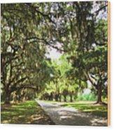 Charleston Oaks 3 Wood Print