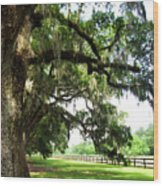 Charleston Oaks 5 Wood Print