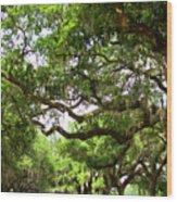 Charleston Oaks 8 Wood Print