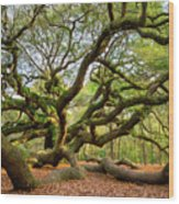 Charleston Sc Angel Oak Tree South Carolina Landscape Wood Print