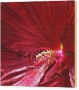 Charlotte Beach Red Hibiscus Wood Print